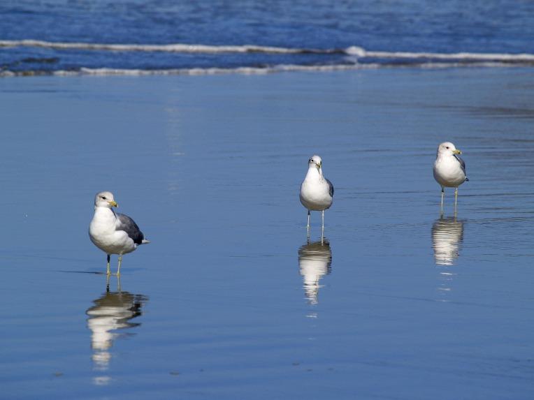 seagullsstockphoto